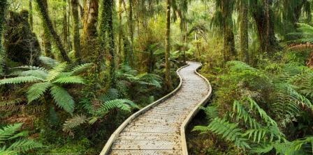 Новая Зеландия - зеленый рай